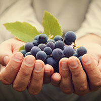 Voyageurs du Vin Coffret I Love Malbec 2020